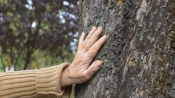 Vrásčitá fena ručně hladící strom, péče o životní prostředí, spojení příroda