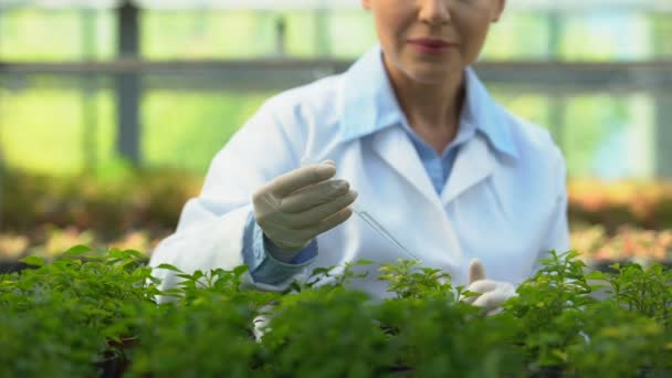 Female scientist dripping pest control agent on seedlings, plant health care