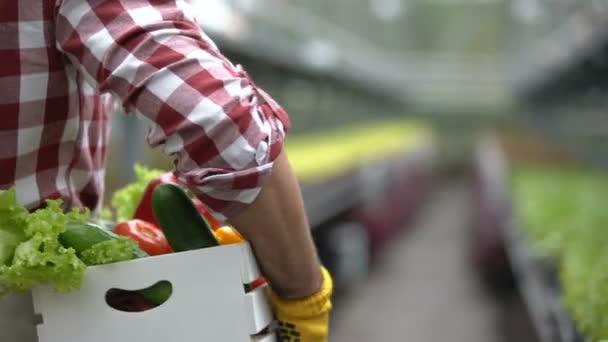 Friss zöldségeket dobozban szállító mezőgazdasági termelő, biogazdálkodási technológiák, tenyésztés