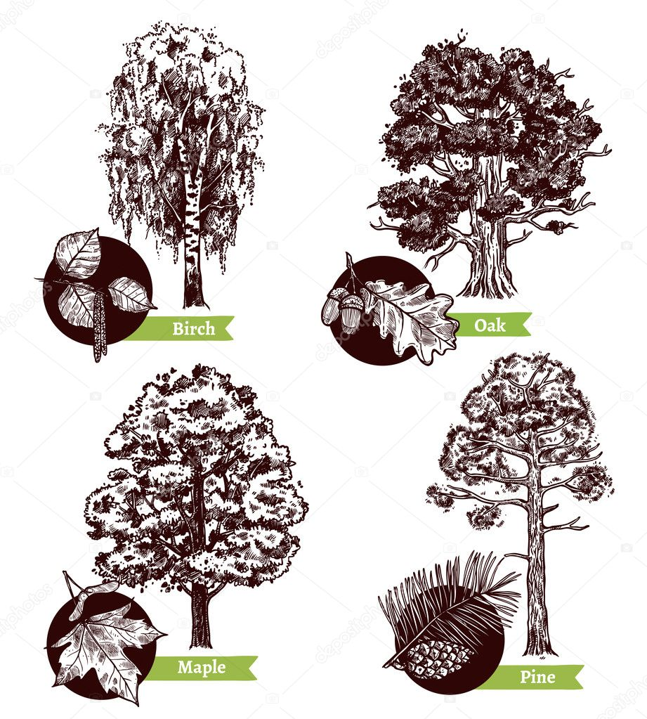 Sketch Tree Leaves Design Concept