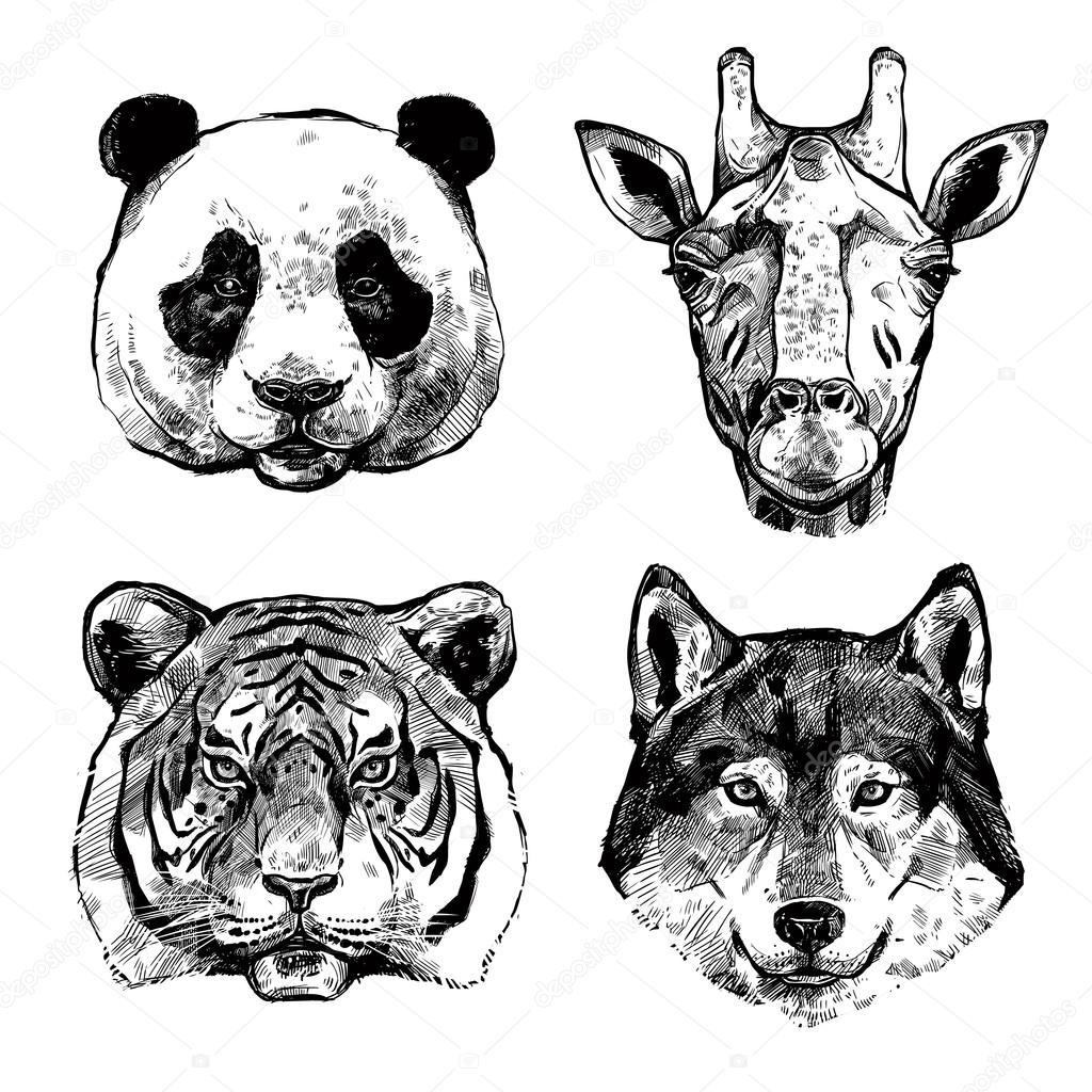 Ritratti di animali disegnati a mano vettoriali stock for Immagini teschi disegnati