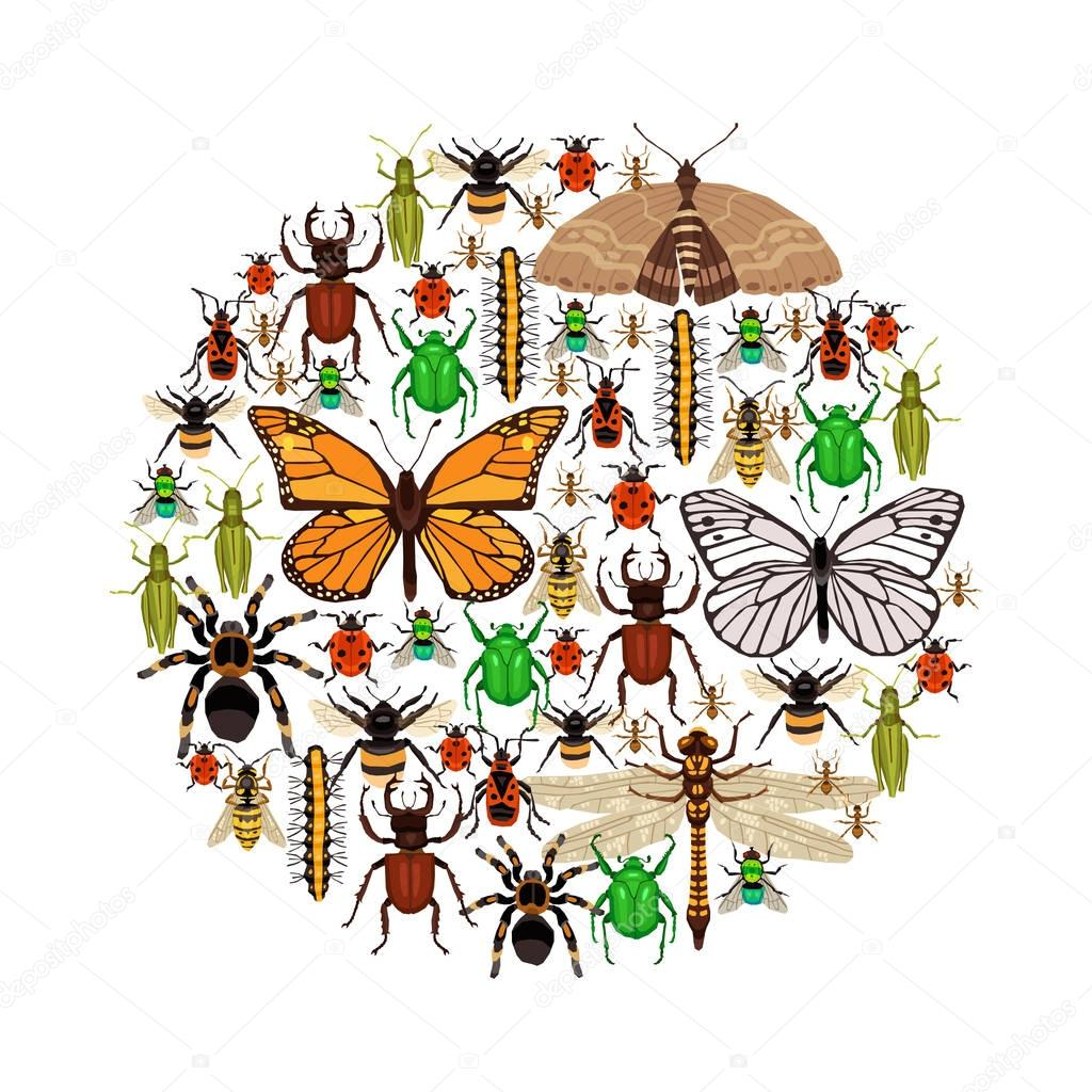Insects Vector Illustration