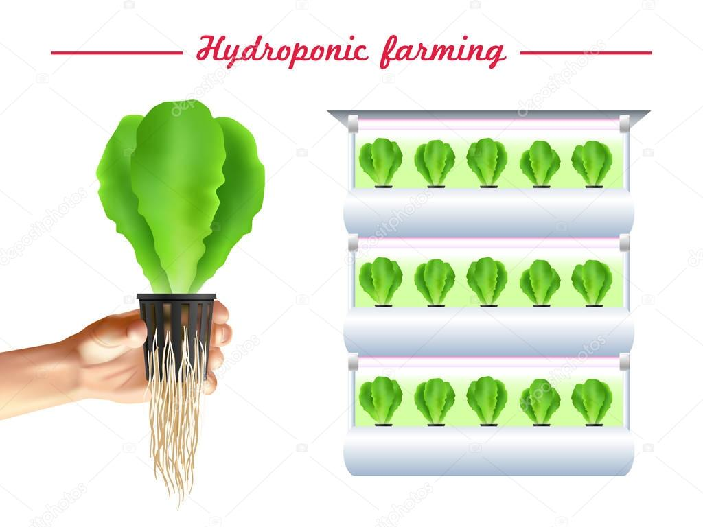 Hydroponics System Poster