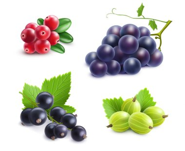 Realistic Berries Set