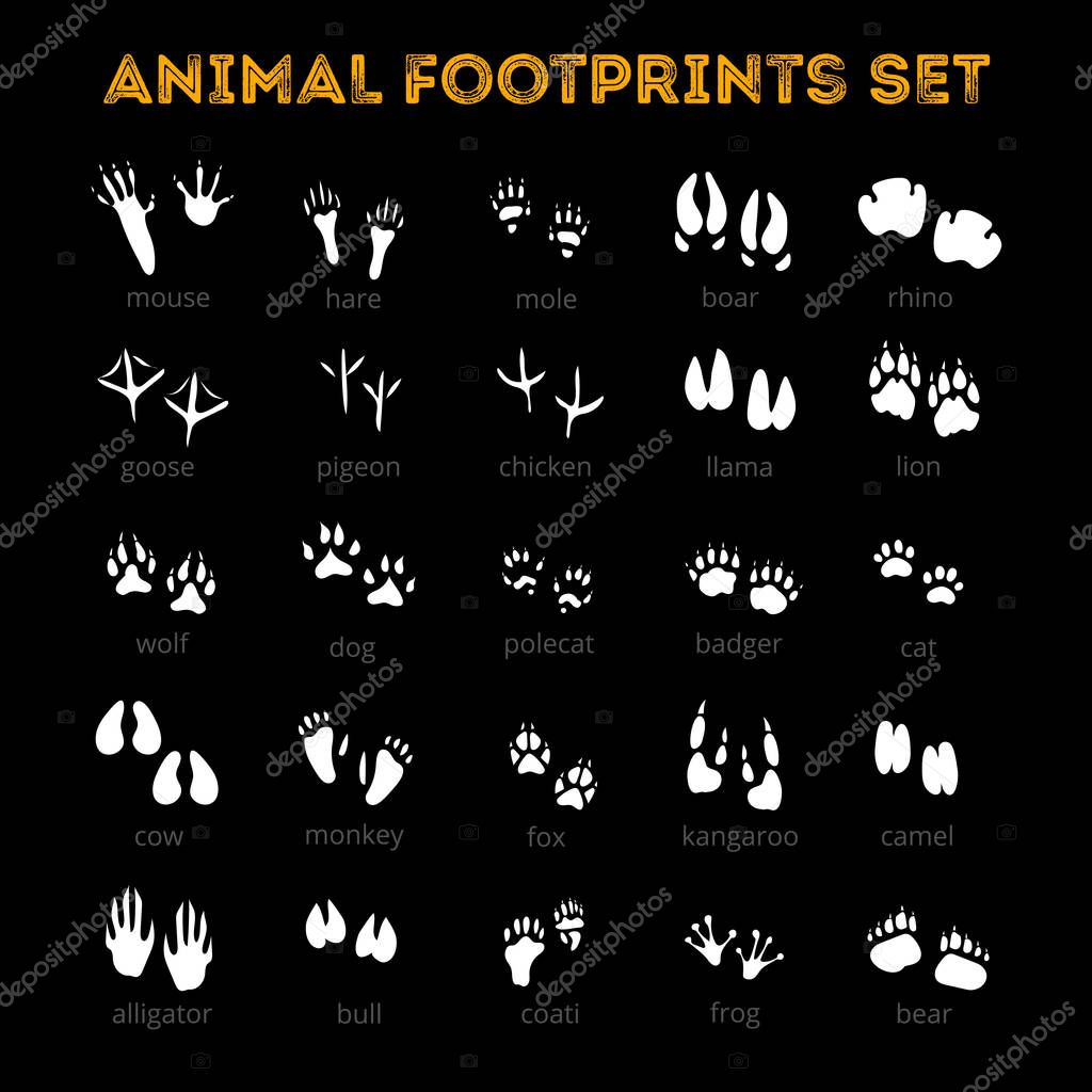 Animal Track Black Background