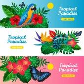Trópusi vízszintes Banner-készlet