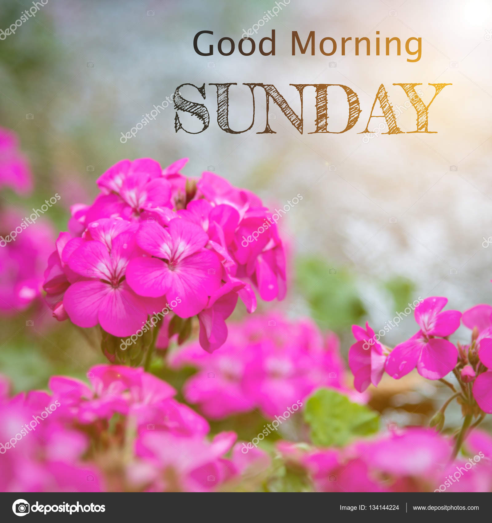 Good Morning Friends Wishing You An Amazing Sunday Download Best