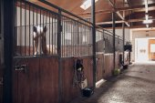 Photo Horses in their stable. Set of  horse bridles on the wooden surface.