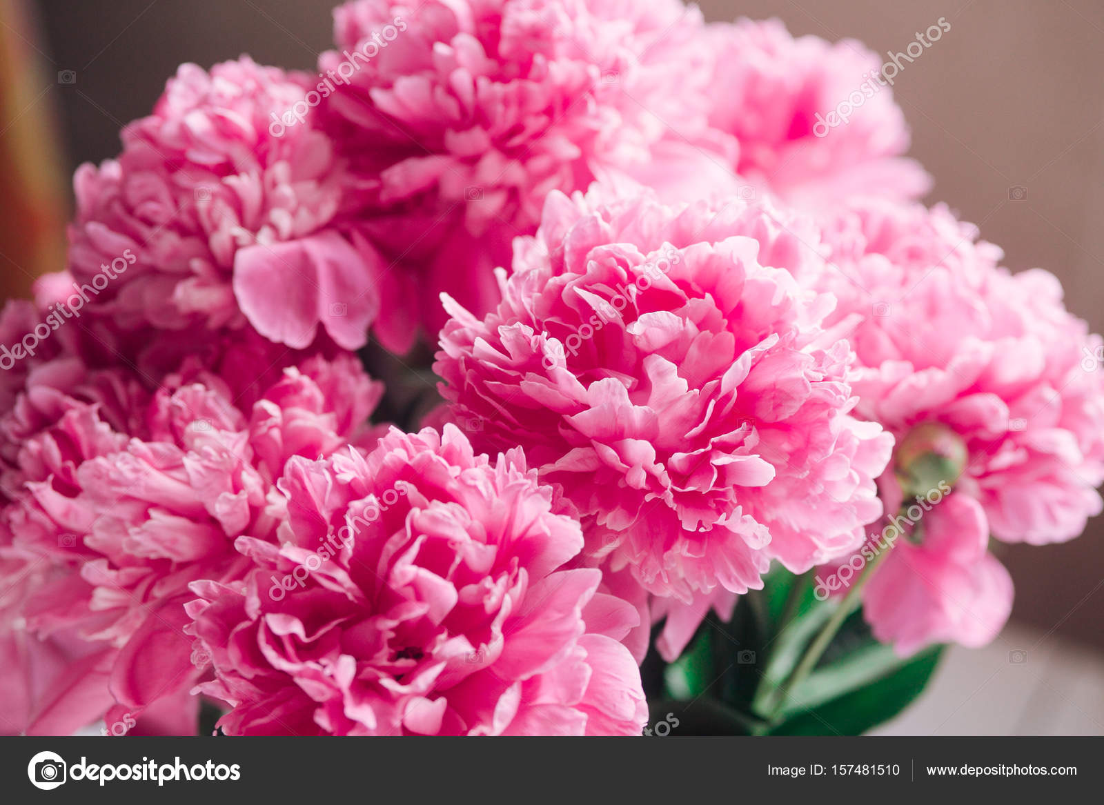 beautiful bouquet of pink peonies.pastel floral wallpaper