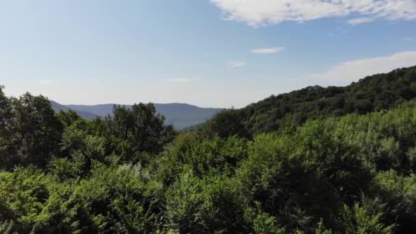 Jehličnaté a listnaté stromy, lesní cesta. Krásná panoramatická fotografie nad vrcholky borového lesa.