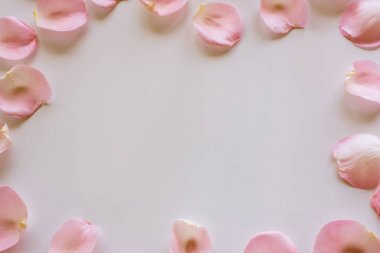 rose petals pink on a wooden background