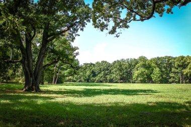 summer park, trees
