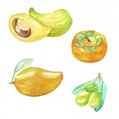 Hand dawn set with watercolor fruits, fresh food, mango, olive