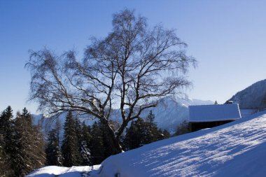 A snowy tree in winter