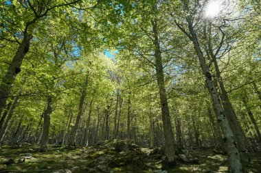 Trees foliage in forest France Pyrenees Orientales