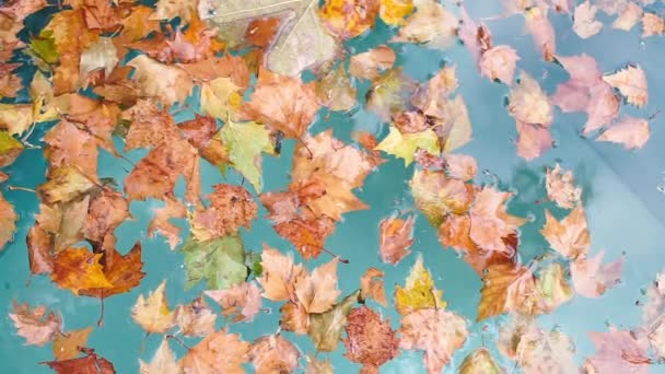 The movement of orange autumn leaves on the surface of blue water.