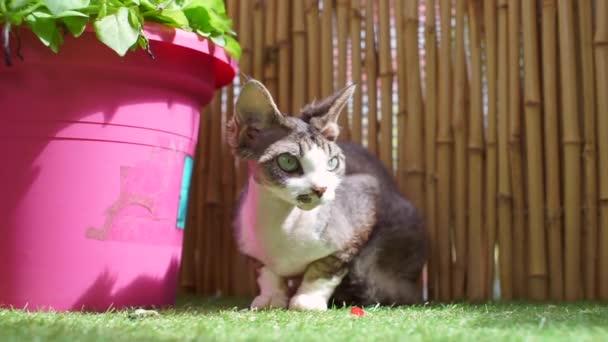 die Katze sitzt in der Sonne, schaut genau hin, wartet auf den Trainer
