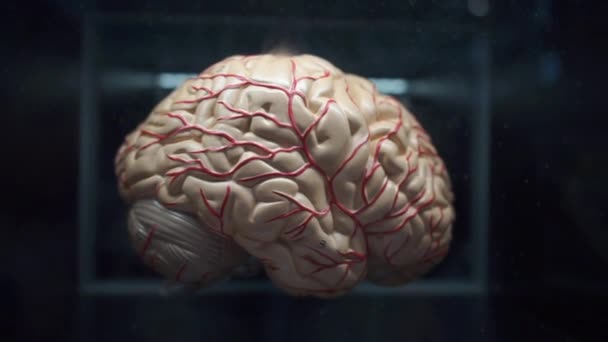 human brain plastic demonstration