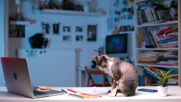 Katze sitzt auf Schreibtisch
