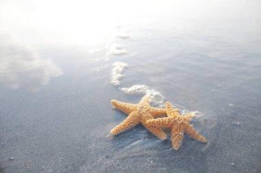 Pair of starfish on the beach