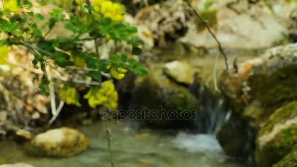 Lesní přírodní potok pozadí