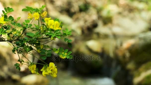 Kvetoucí potok v lese
