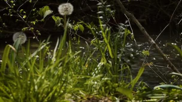 Jarní pozadí u řeky