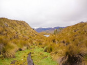 Hervorgehobene Vegetation im Andenparadies