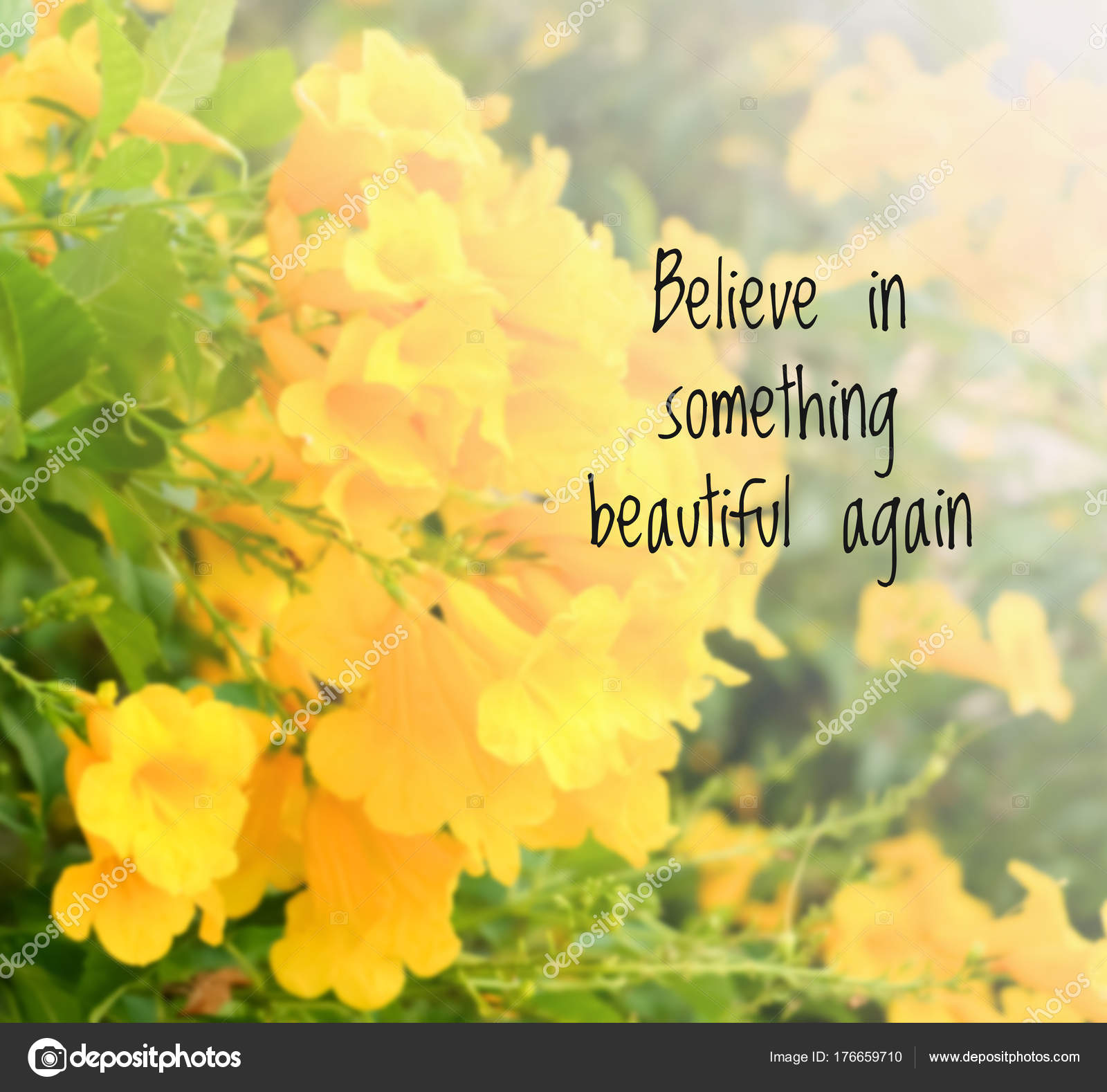Inspirational Quote Blurred Flowers Background Believe Something