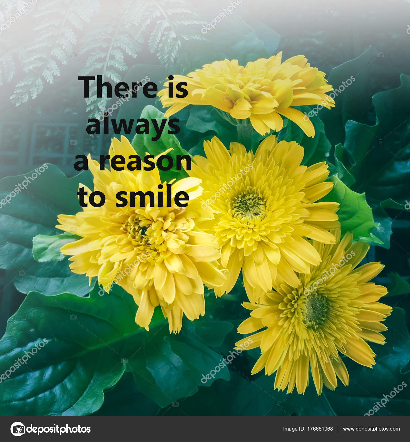 Inspirational Quote Blurred Flowers Background Always Reason Smile