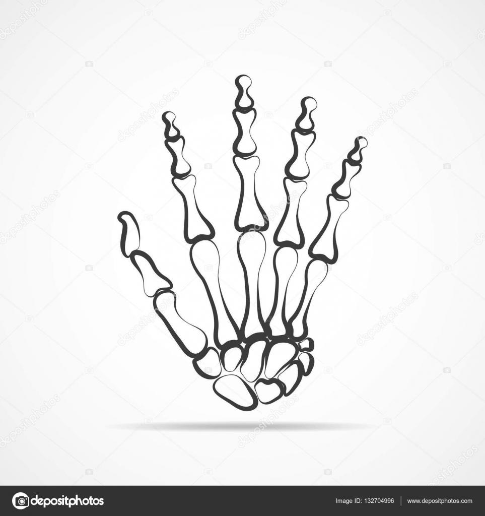 Mano de esqueleto. Ilustración de vector — Archivo Imágenes ...
