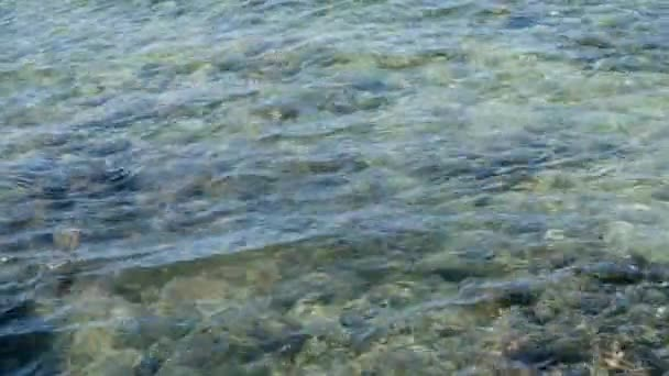 School of Fish Swimming in Ocean Tide Water