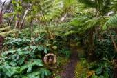 Hawaii Rainforest Treehouse részletek