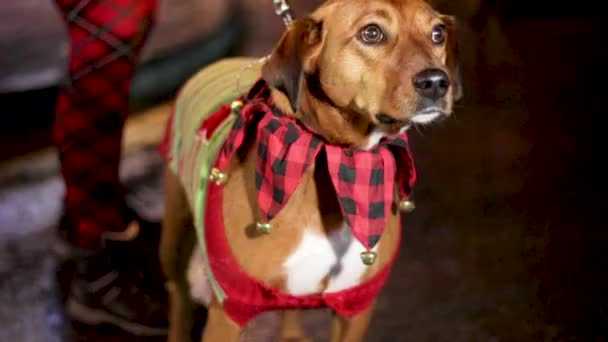 Hund im Weihnachtspulli im Freien