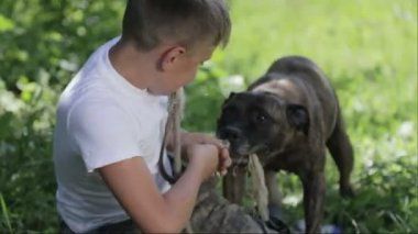 A boy with Staffordshire terriers in the park. Close up portrait of a child with dogs. Pedigree staffordshire with a teenager in nature.