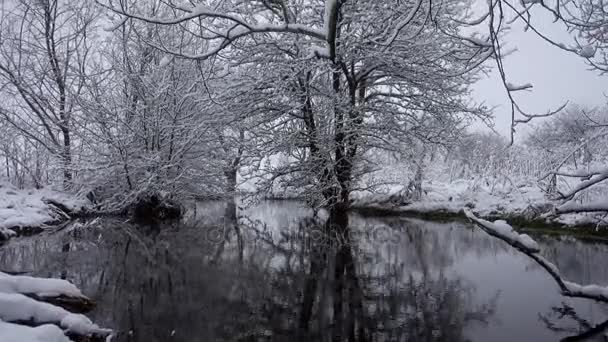 A river in a snow covered forest. River stream with fallen trees in the forest in winter.