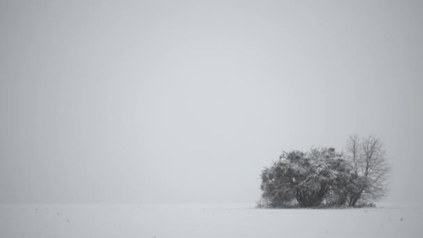 Osamělé stromy ve sněhové bouři v poli. Zimní krajina v poli se stromy. Zimní kompozici na 4 k video.