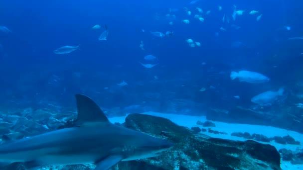 Video di animali subacquei