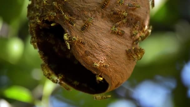 Video of colony of bees