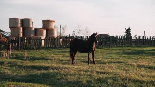 Hříbě běží ke koňi.Kůň s hříbětem na louce v západu slunce