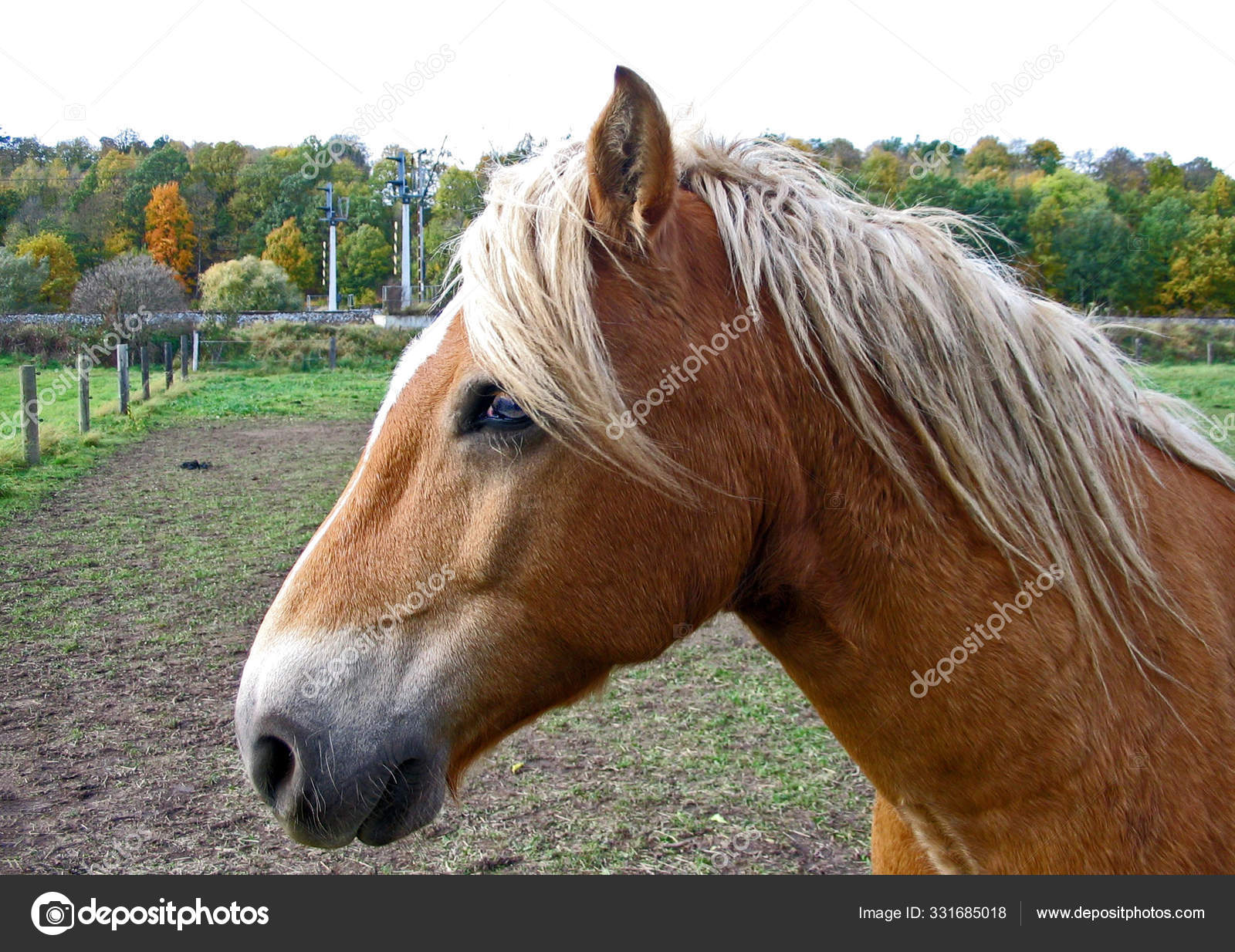 Cute Horse Wild Nature Stock Photo C Panthermediaseller 331685018