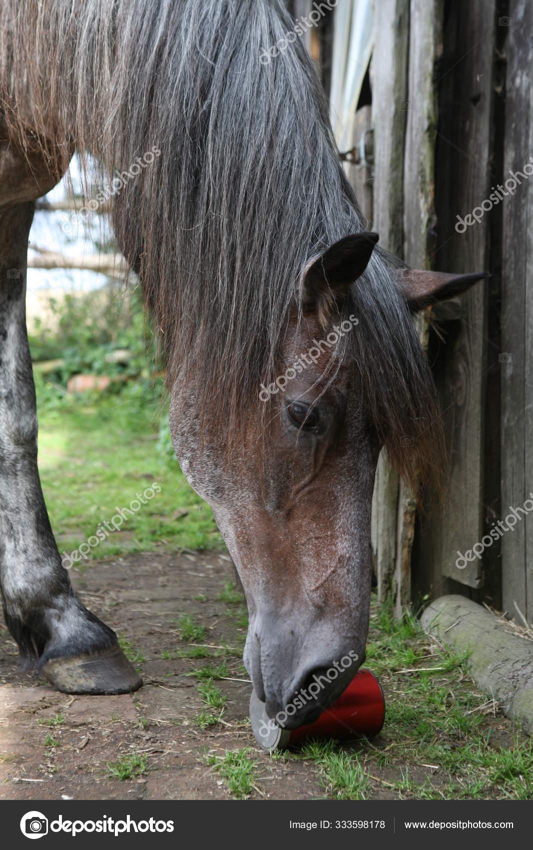 Cute Horse Wild Nature Stock Photo C Panthermediaseller 333598178
