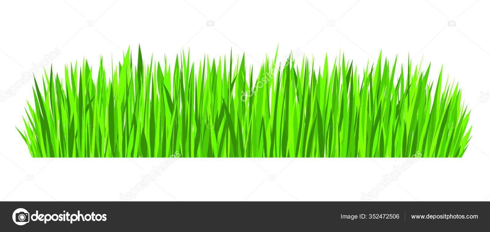 green grass border vector design element isolated white background stock vector c panthermediaseller 352472506 https depositphotos com 352472506 stock illustration green grass border vector design html