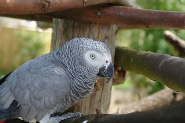 scenic view of beautiful parrot bird