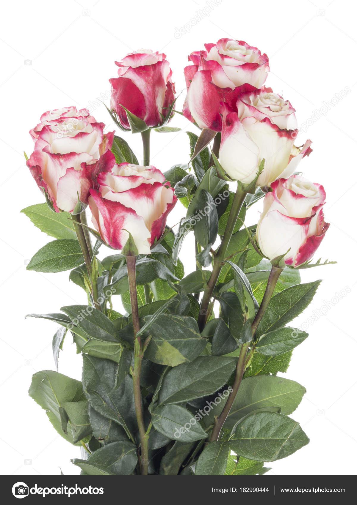 blumenstrau aus rosen auf wei em hintergrund stockfoto andreevaee 182990444. Black Bedroom Furniture Sets. Home Design Ideas