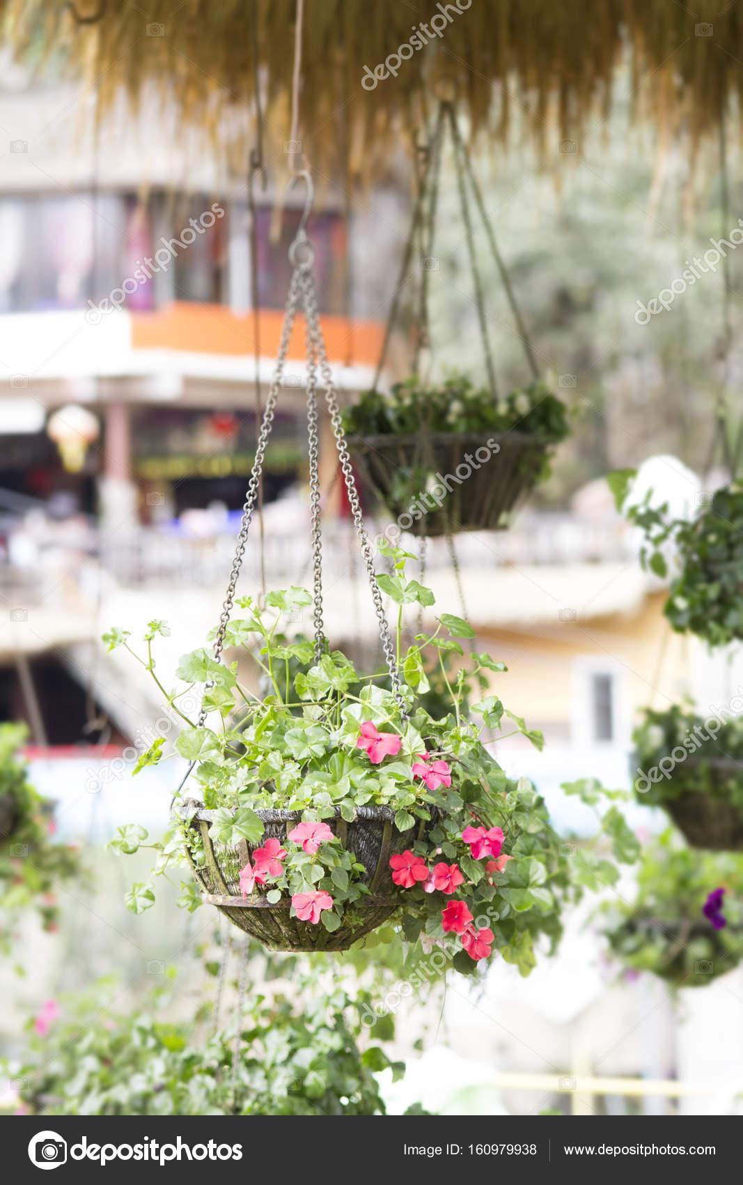 Fleur Suspendus Decoration Pot Dans Le Jardin Photographie Aaa187