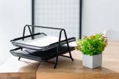 Irodaasztal növényekkel és írószerekkel napfényben