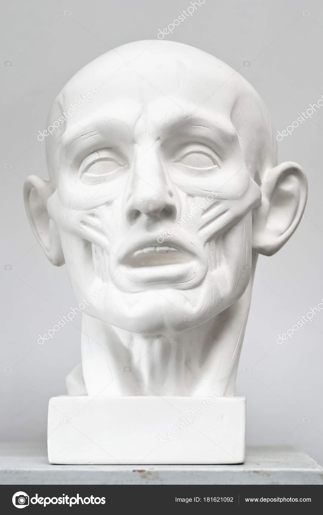 Face muscles drawing | Plaster Anatomical Head Model Cast
