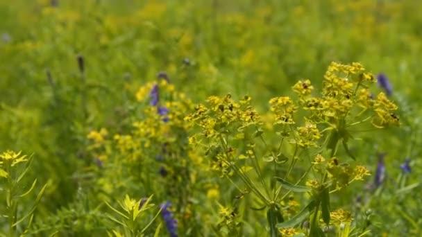 Květinové pole houpat ve větru
