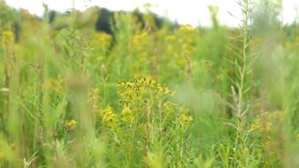 Přírodní Zátiší s květinami pole